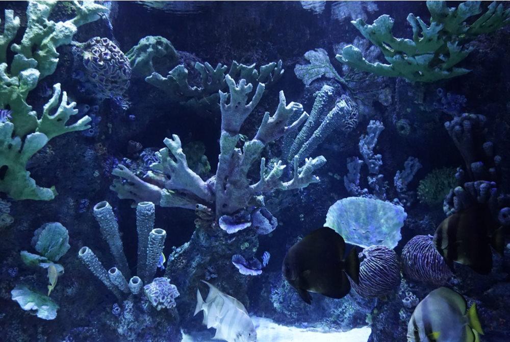 aquarium in Antalya in Turkey