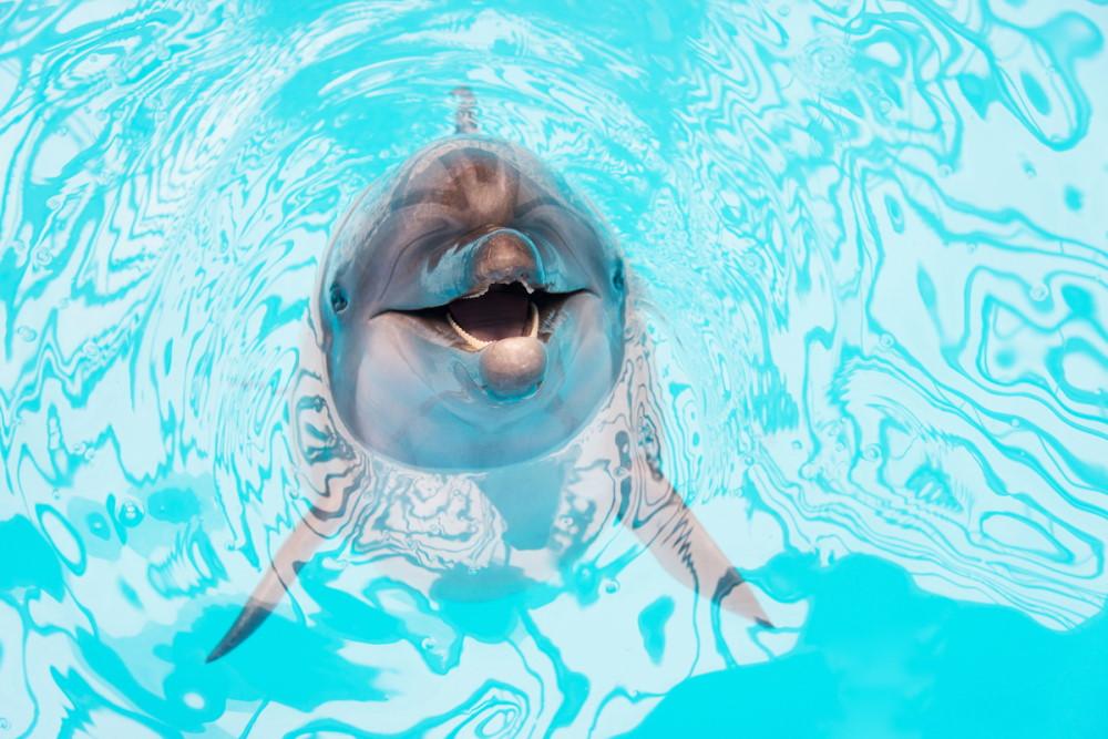 Aqualand & Dolphinland in Antalya in Turkey