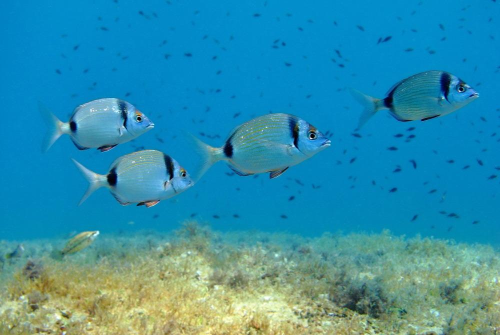 scuba diving experience in kemer in antalya in turkey