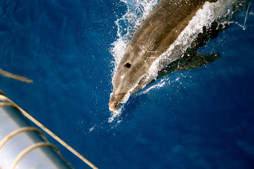 Dolphin Island in Antalya in Turkey