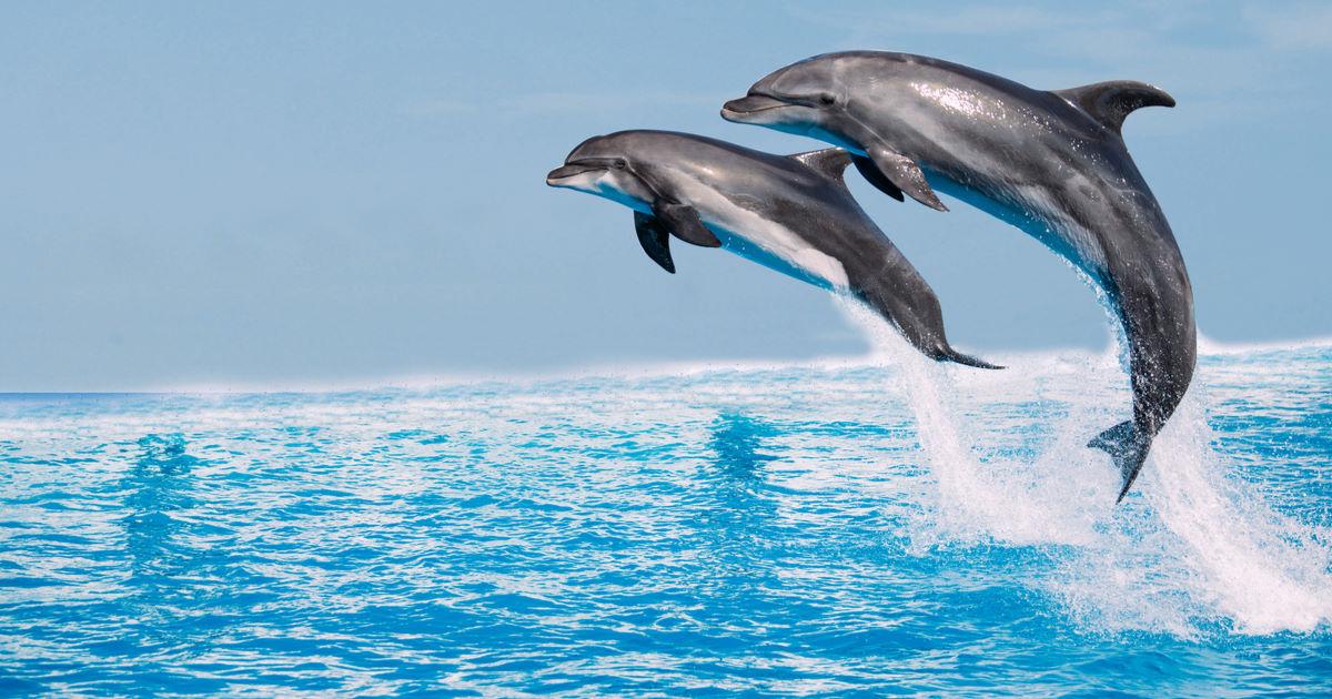 Dolphin Island in Side in Antalya