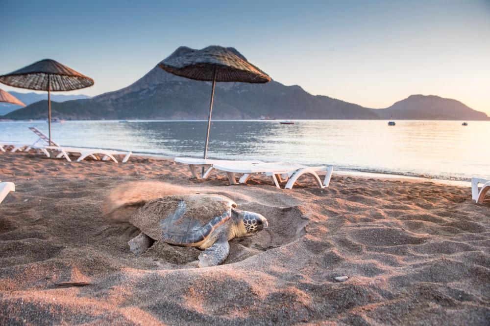 Olympos and Adrasan Beach Caretta Caretta Turtles in Antalya