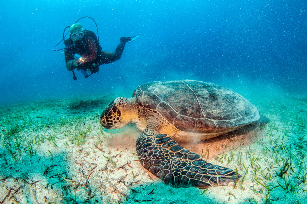 Turtle during a dive at Kas in Turkey